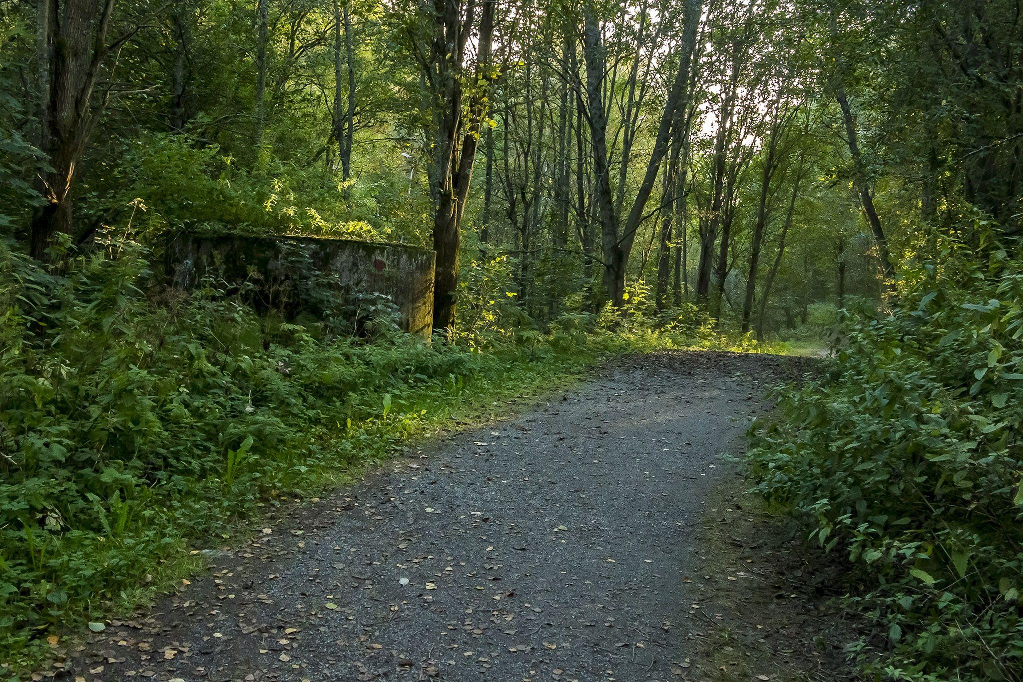 Forest Trail by Harri Hedman