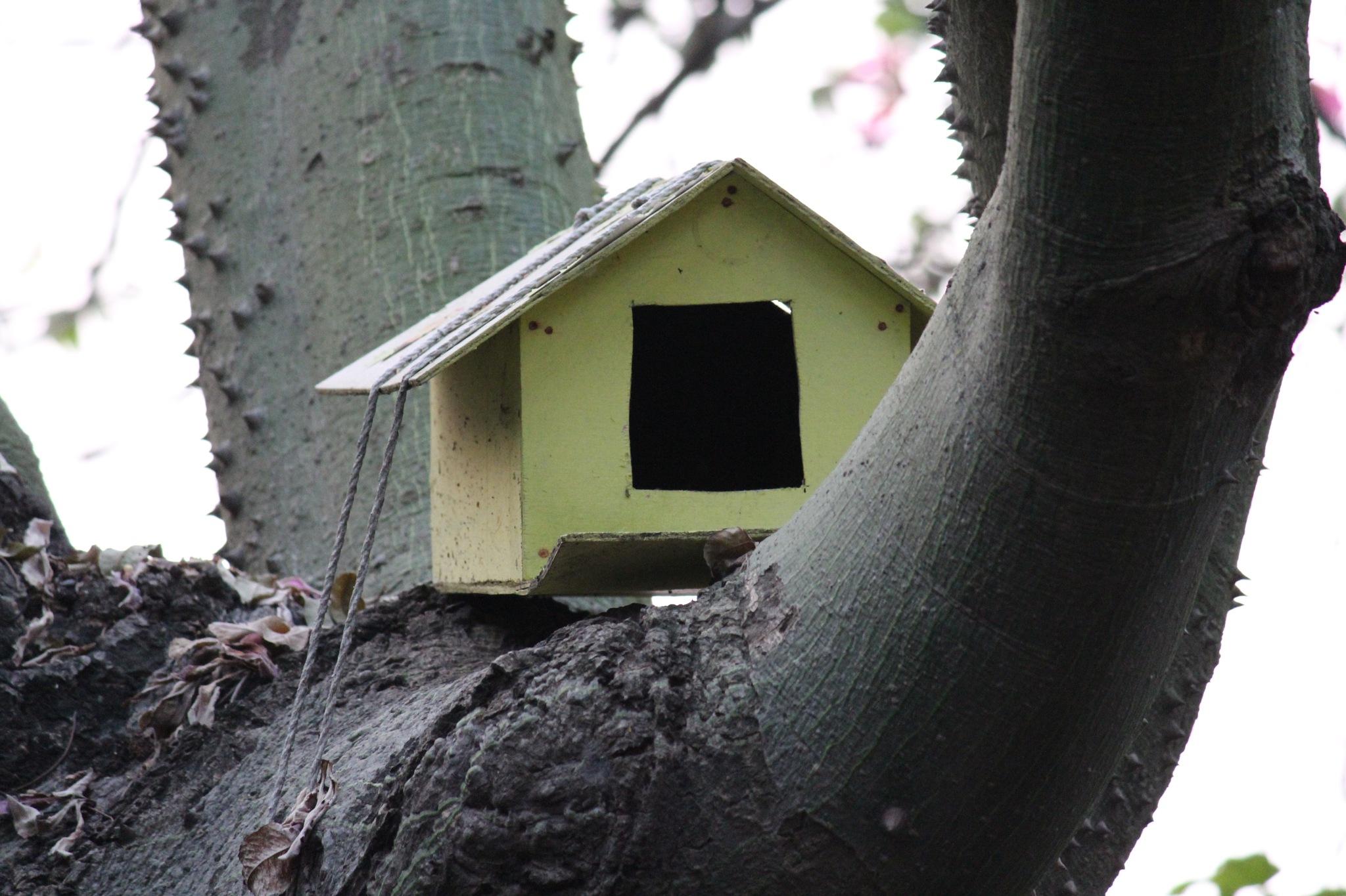 Tree House by Himayun Meer