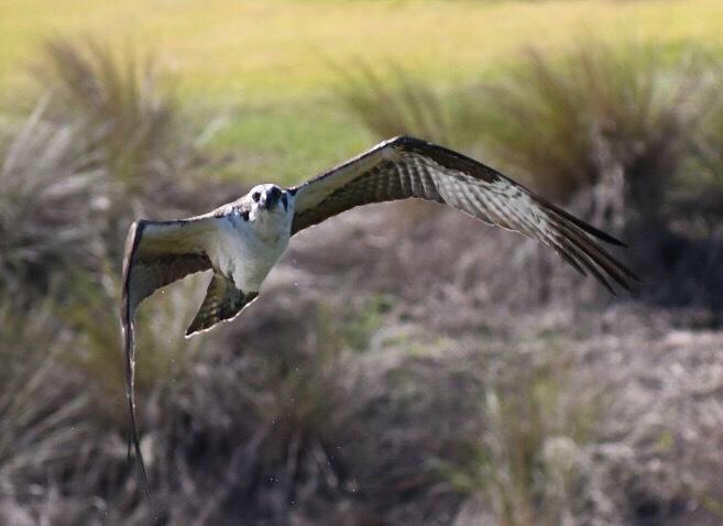 Seagull In Flight by Deanna Dahl Wefel