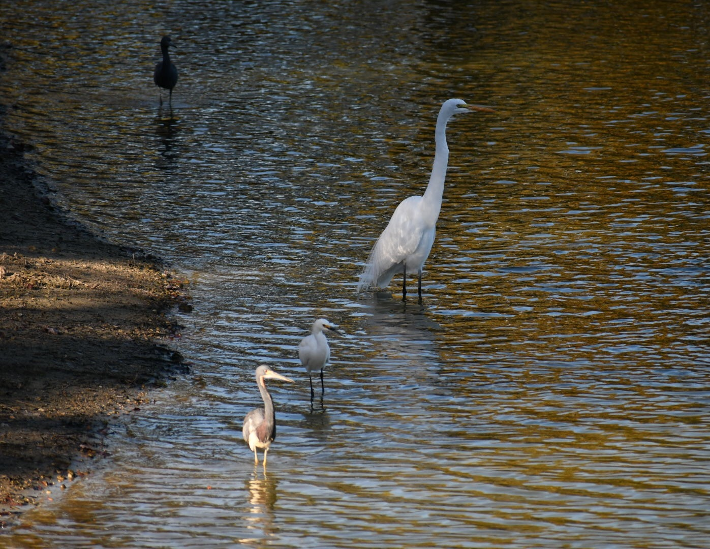 Afternoon at the Lake by Deanna Dahl Wefel