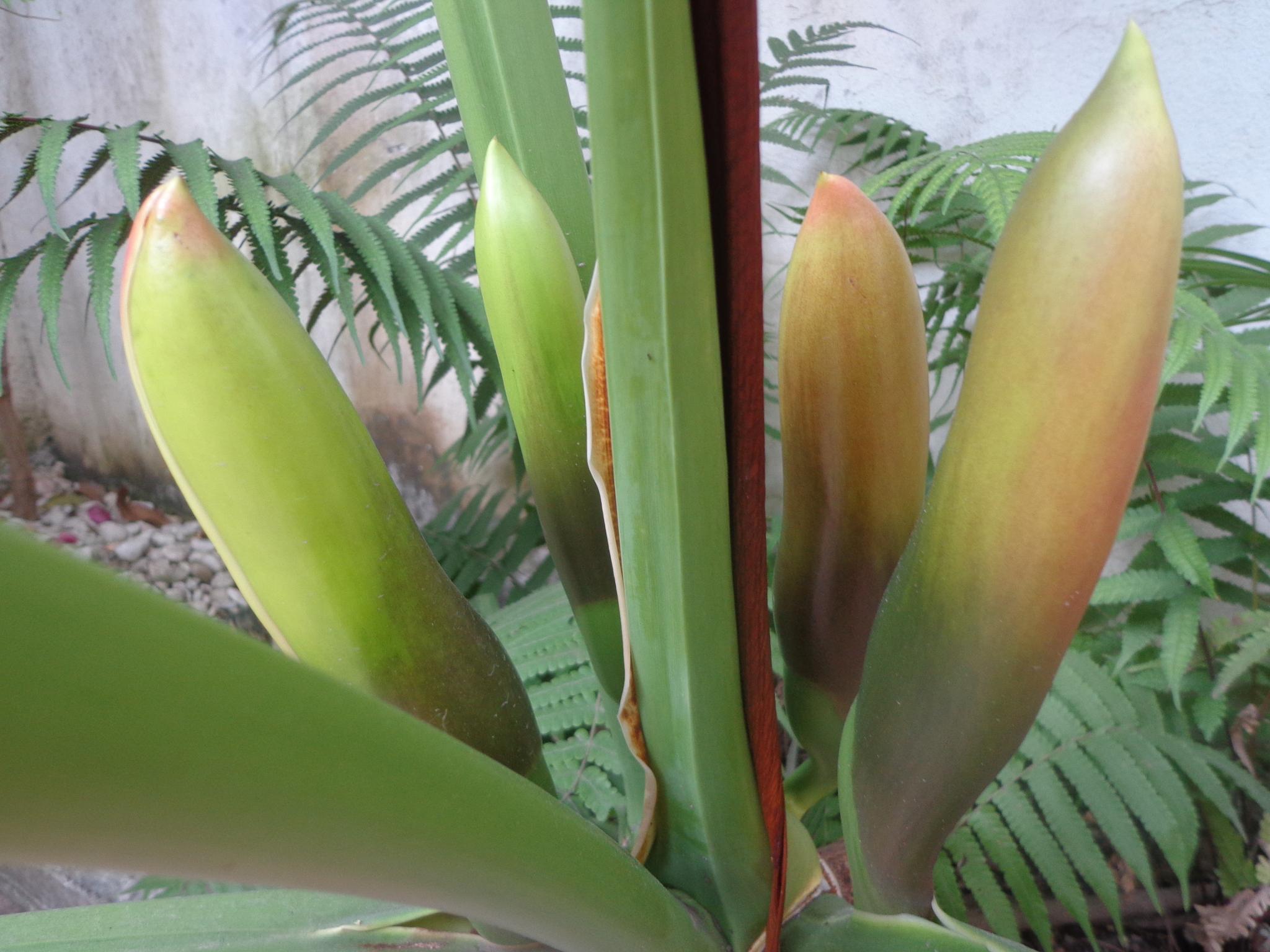 Photo in Nature #broto #folha #espiral