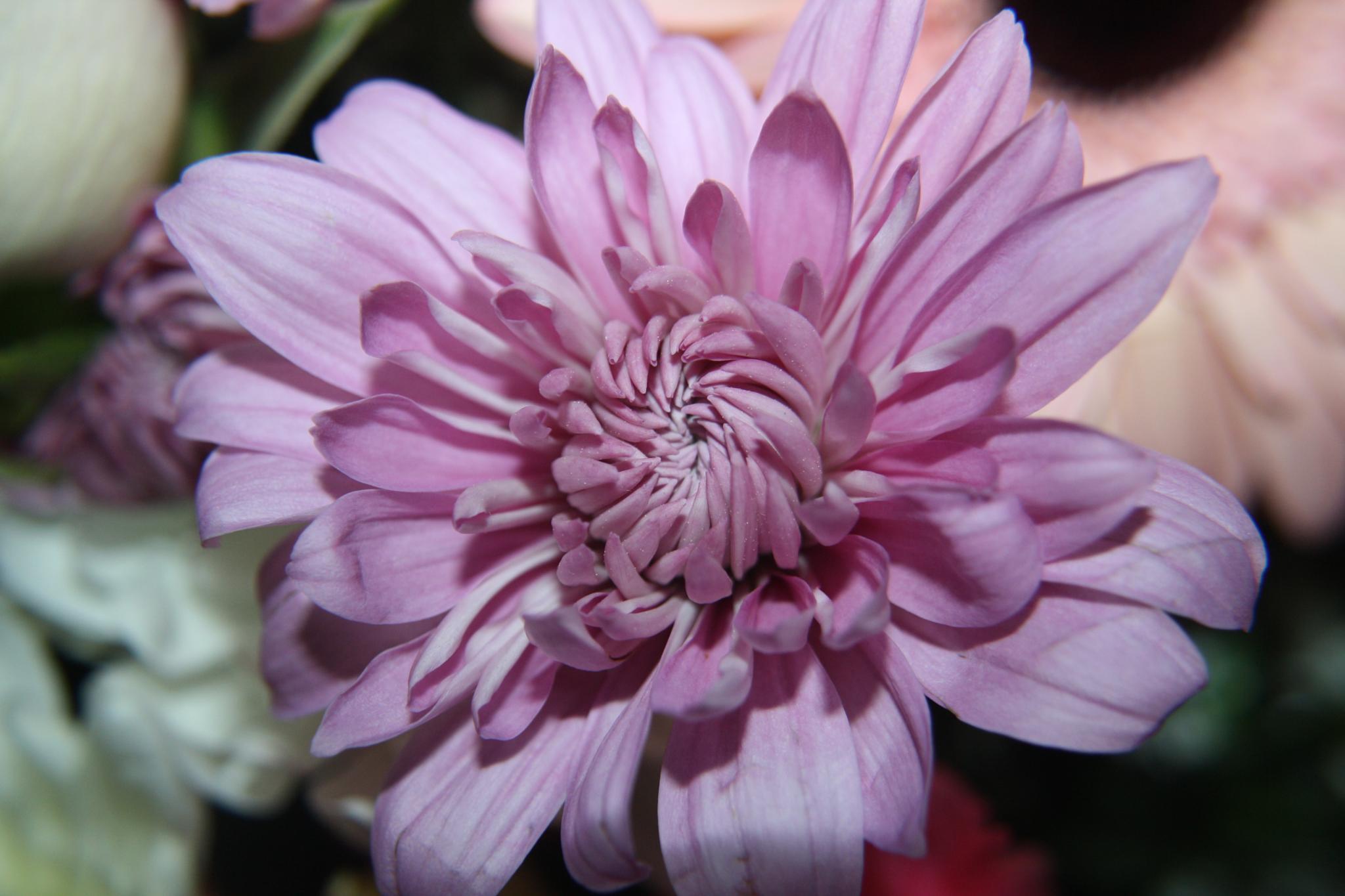 Full Bloom by Sharon Abbott
