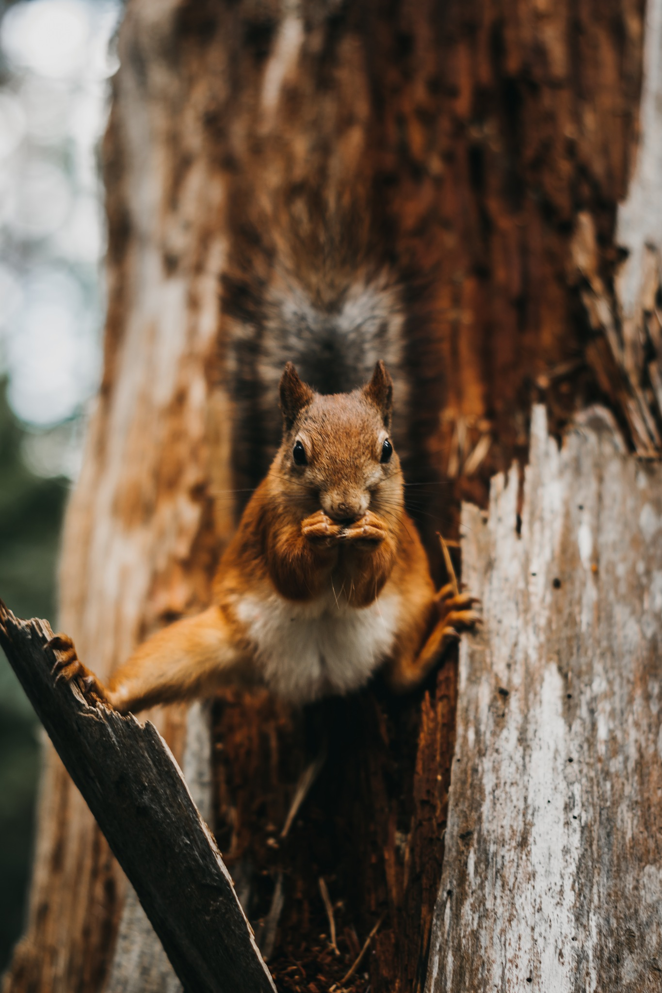Karate-Squirrel by dfvares