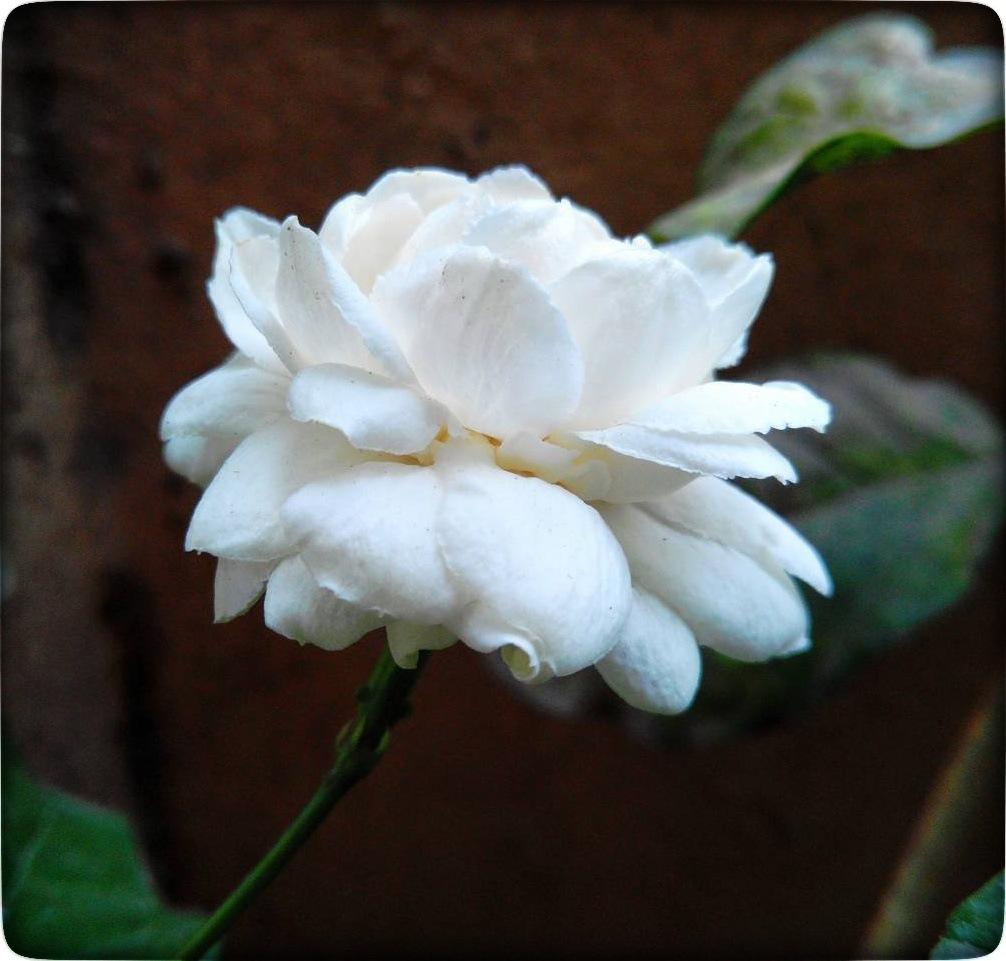 flower  by narasimhan03