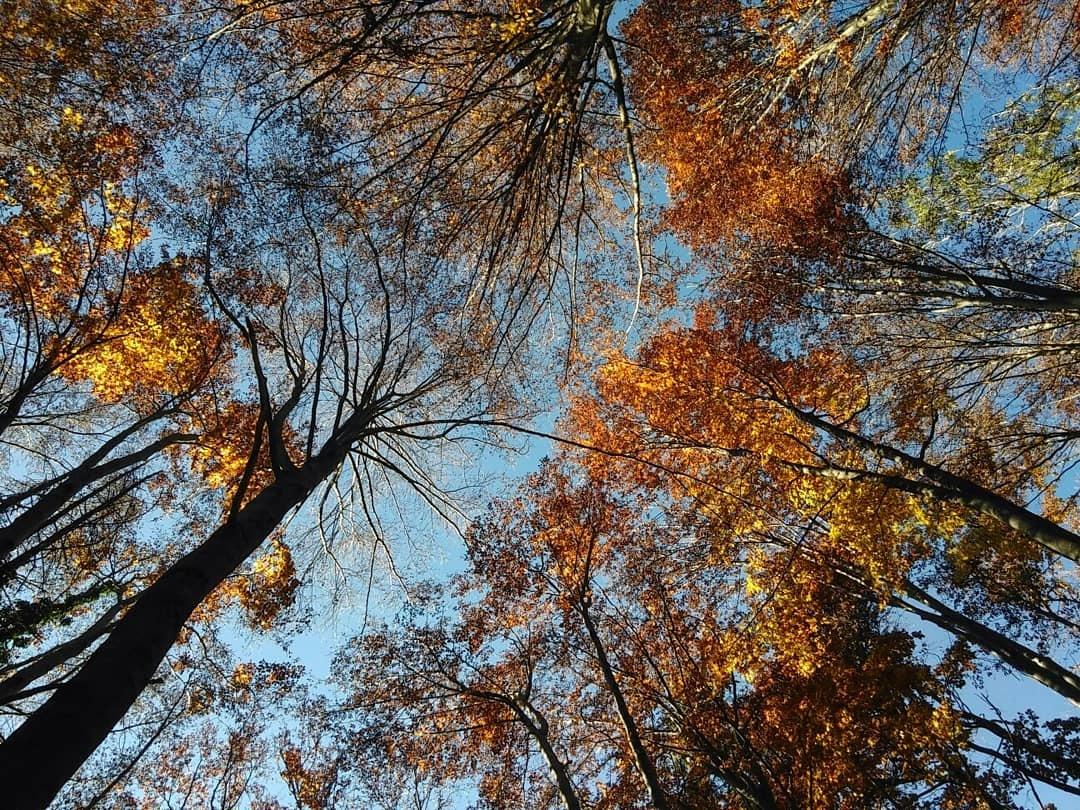 Autumn by Elisa