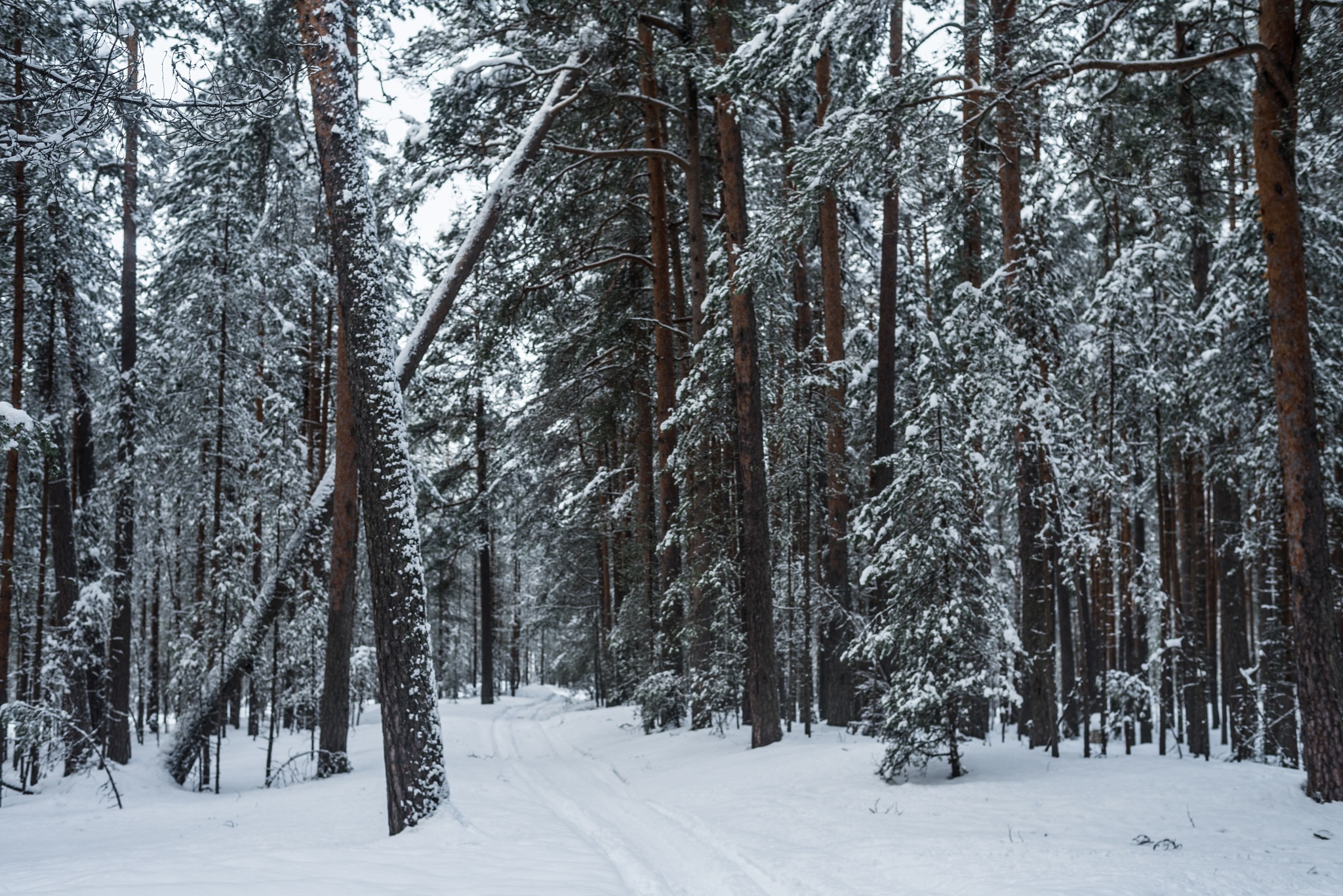 Photo in Landscape #winter #snow #ice #gold #frozen #frost #forest #trees #nature #landscape #landscapephotography