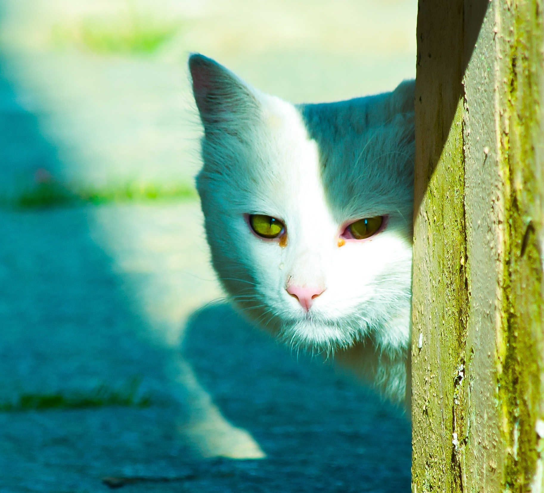 Photo in Animal #cat #kitten #random #photography #animalbehavior #animals