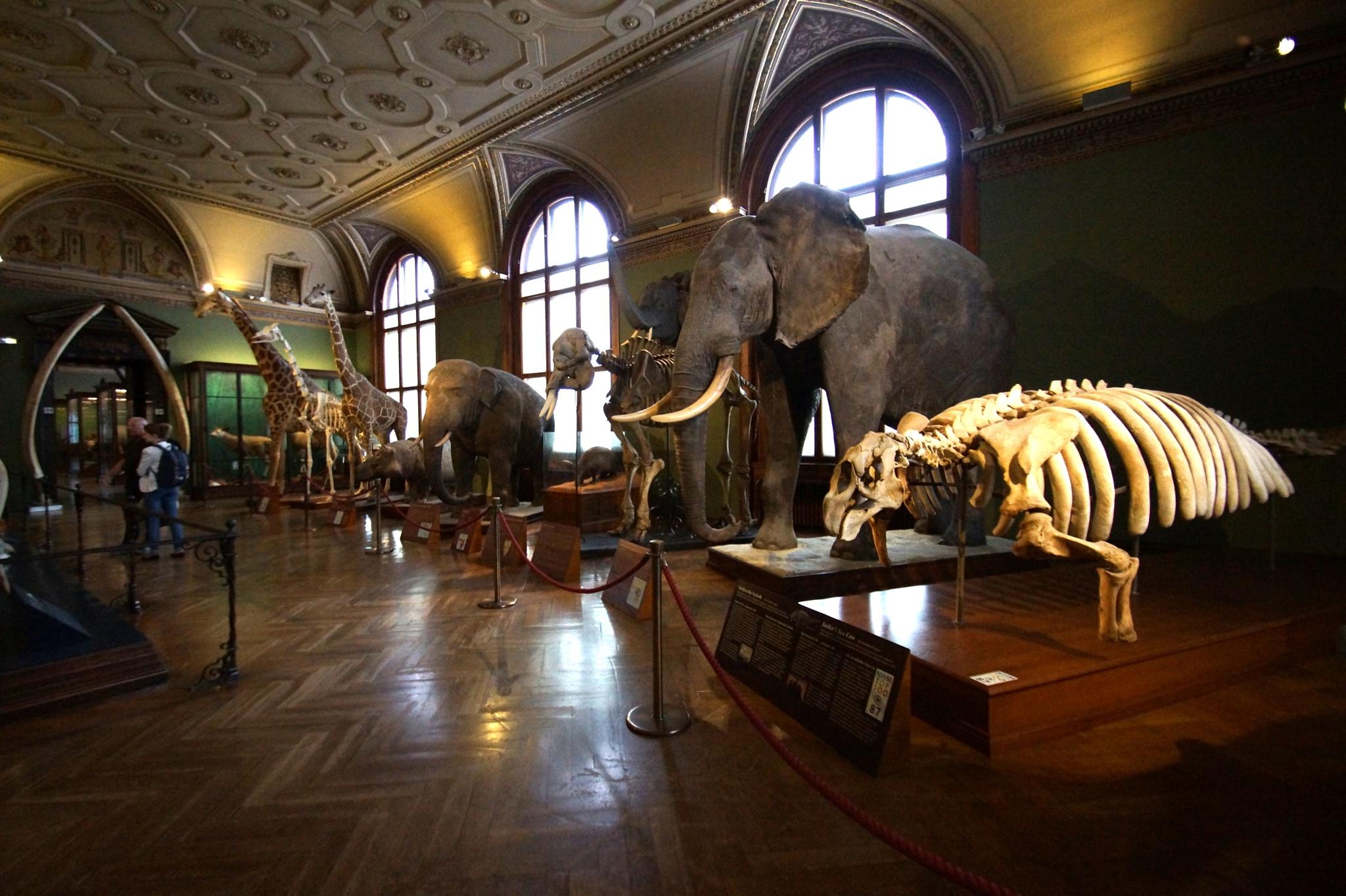 Naturhistorisches Museum-3 by MEHMET
