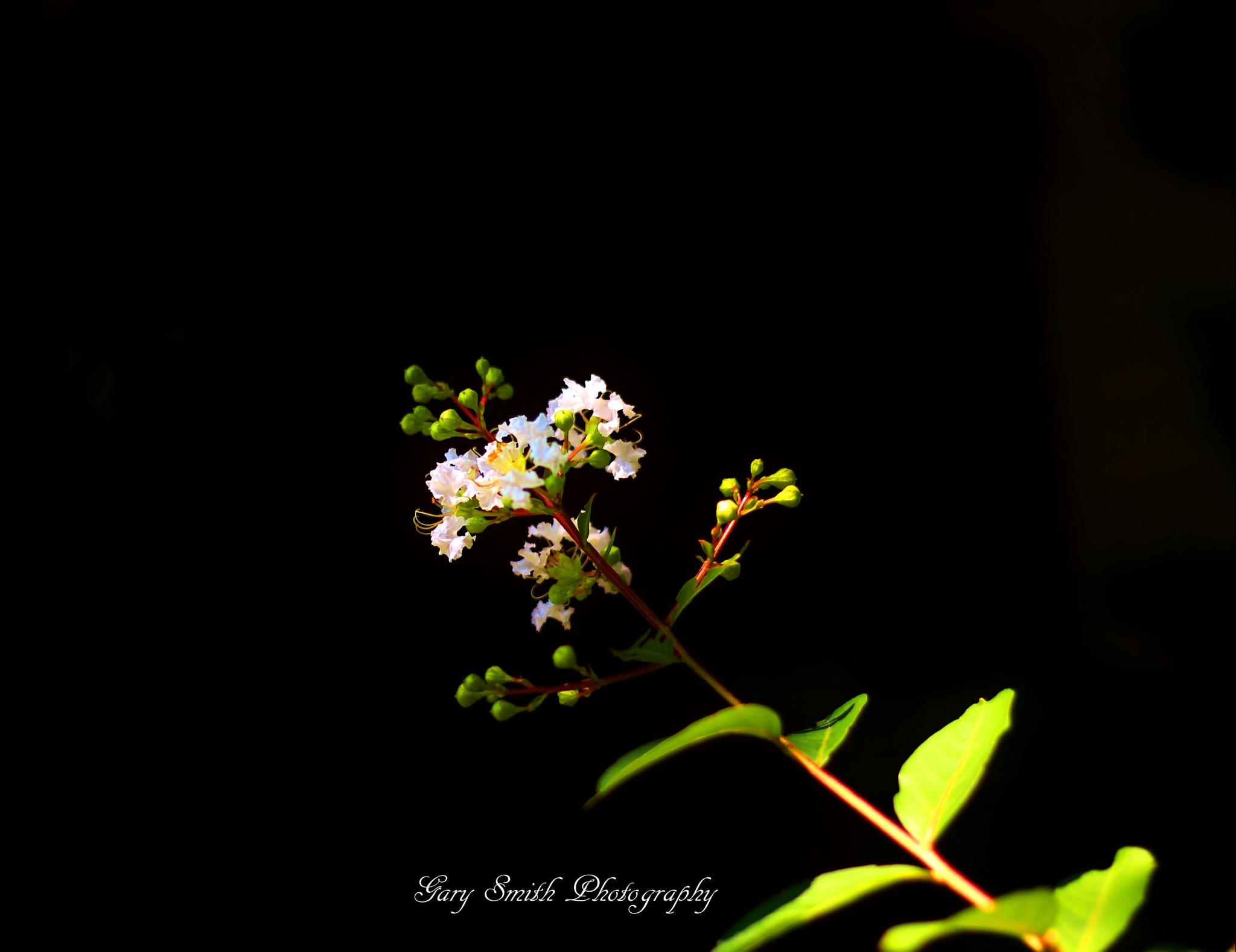 Photo in Nature #sun #flower's