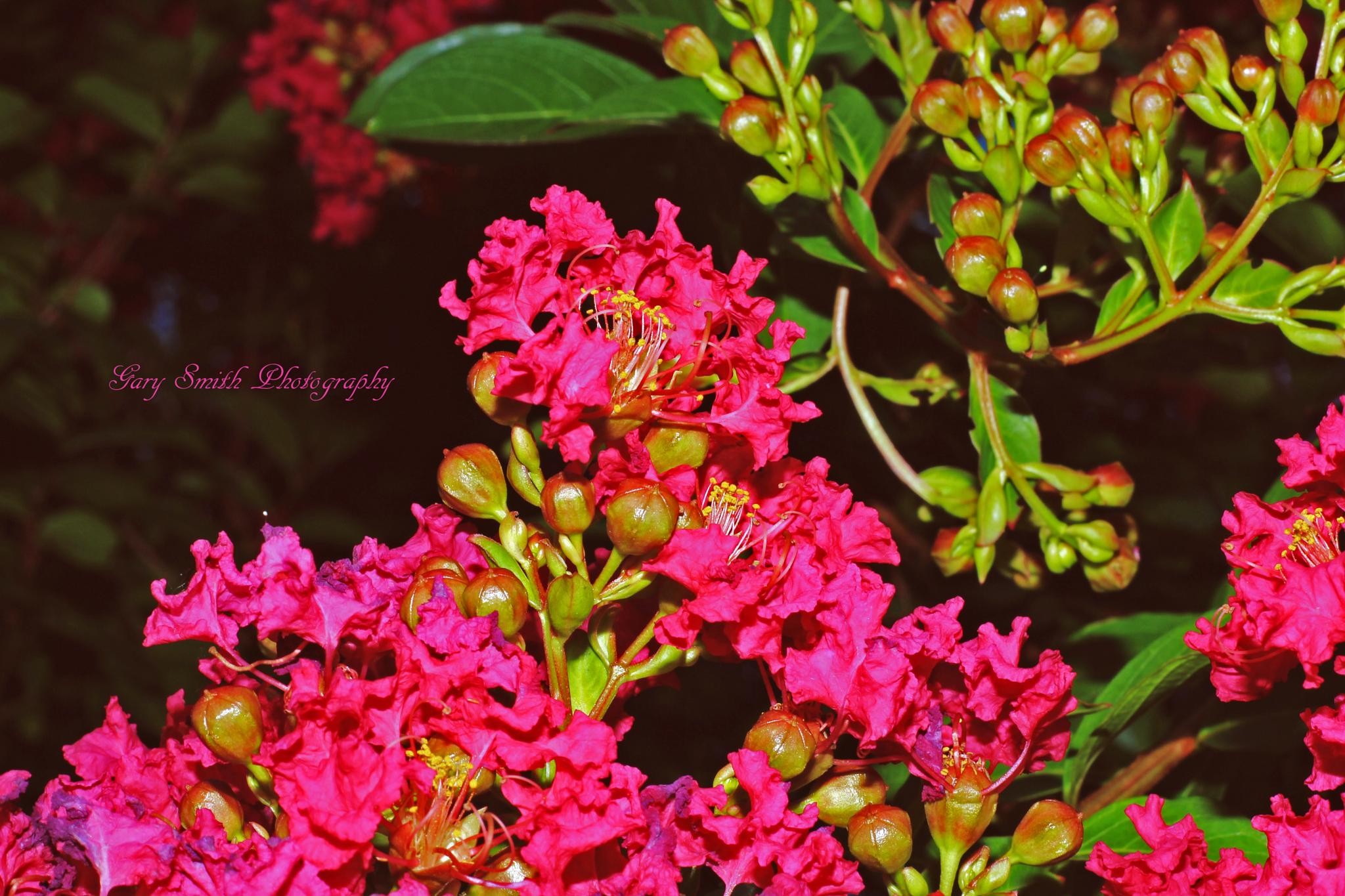 Photo in Nature #pink flowers #flower
