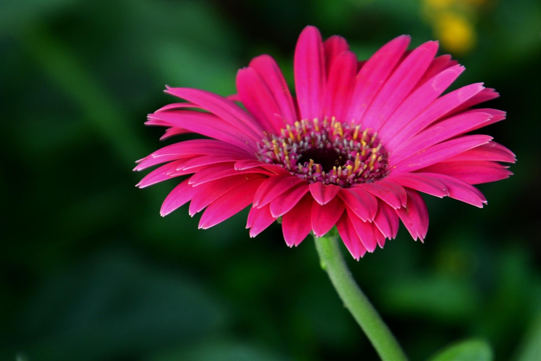 Photo in Random #trending #outdoor #colours #denyspeel #nature #detail #bokeh #elegant