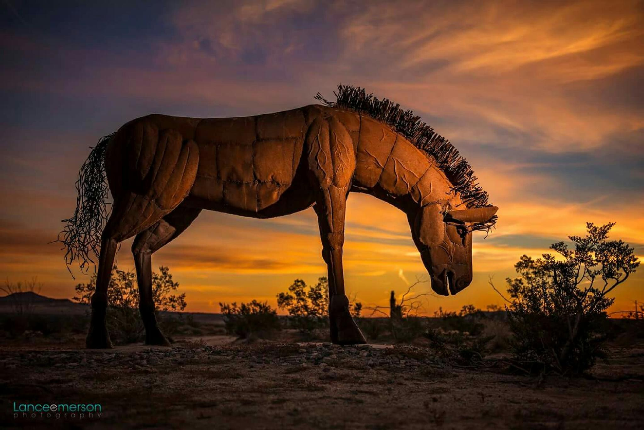 Sunrise Horse  by LanceEmersonPhotography