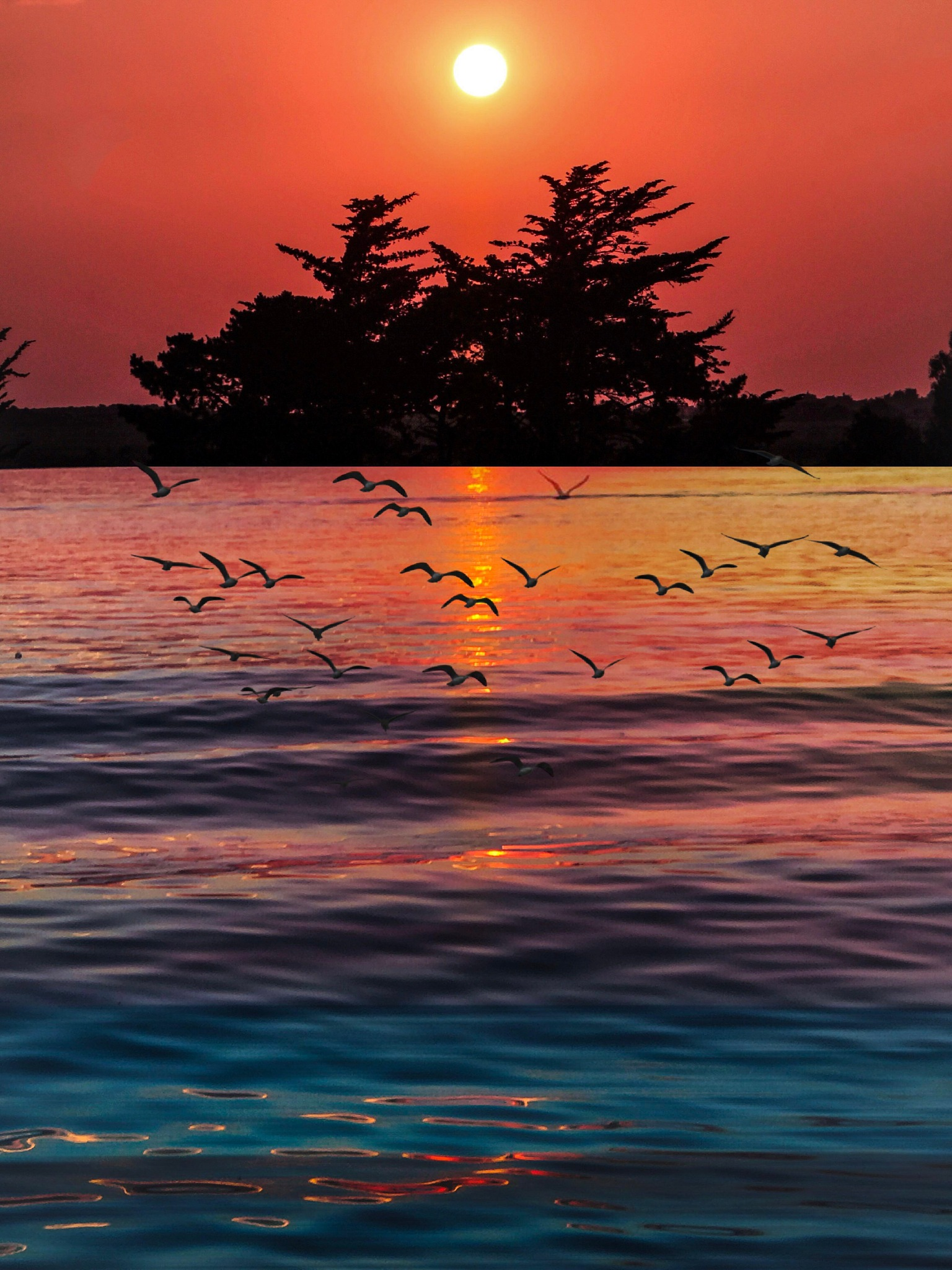 Photo in Random #sunset #sunrise #stunning #scene #scenery #view #colorful #sun #golden hour #sea #seascape #beach #wonderful #beautiful #awesome #amazing #fantastic #magnificent #waves #nature #lightroom #landscape #cityscape #kuwait #silhouette #birds #trees #photography #photographer