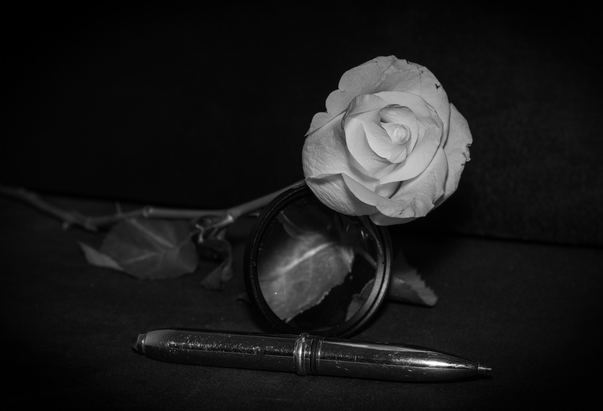 Photo in Random #roses #white #black #flower #pen #lens #thought