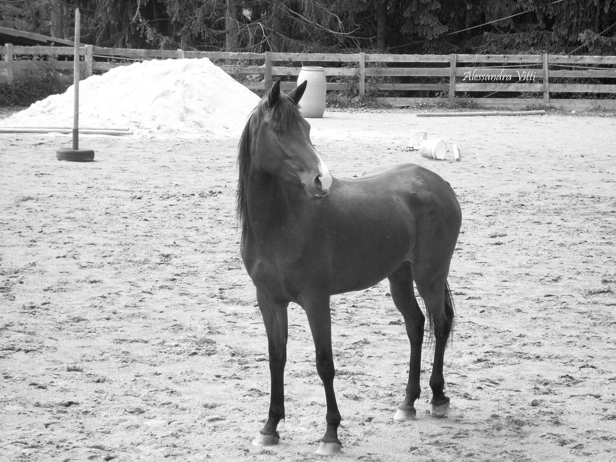 Horse  by avitti