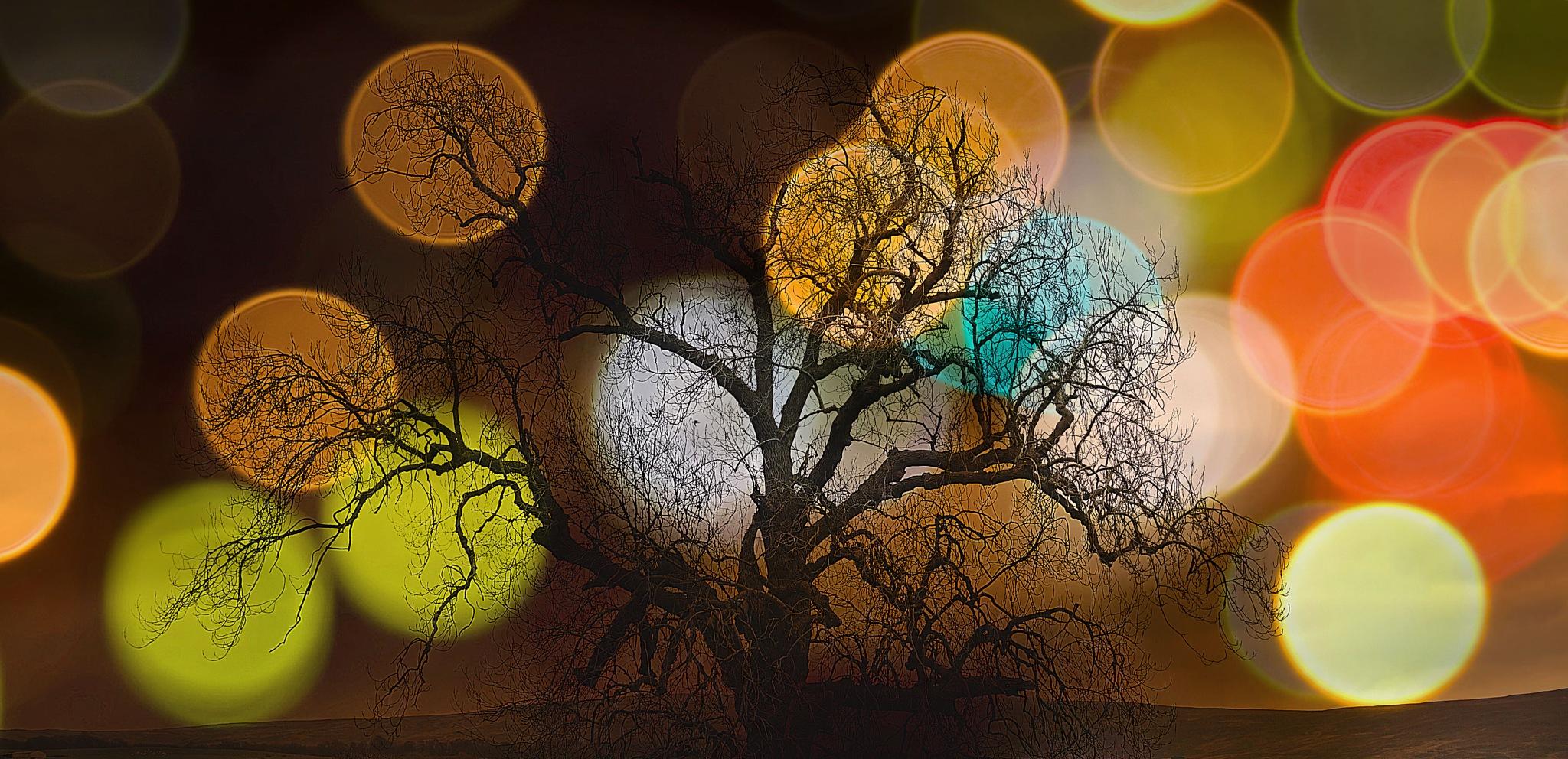 Glare by Geraldine Francis