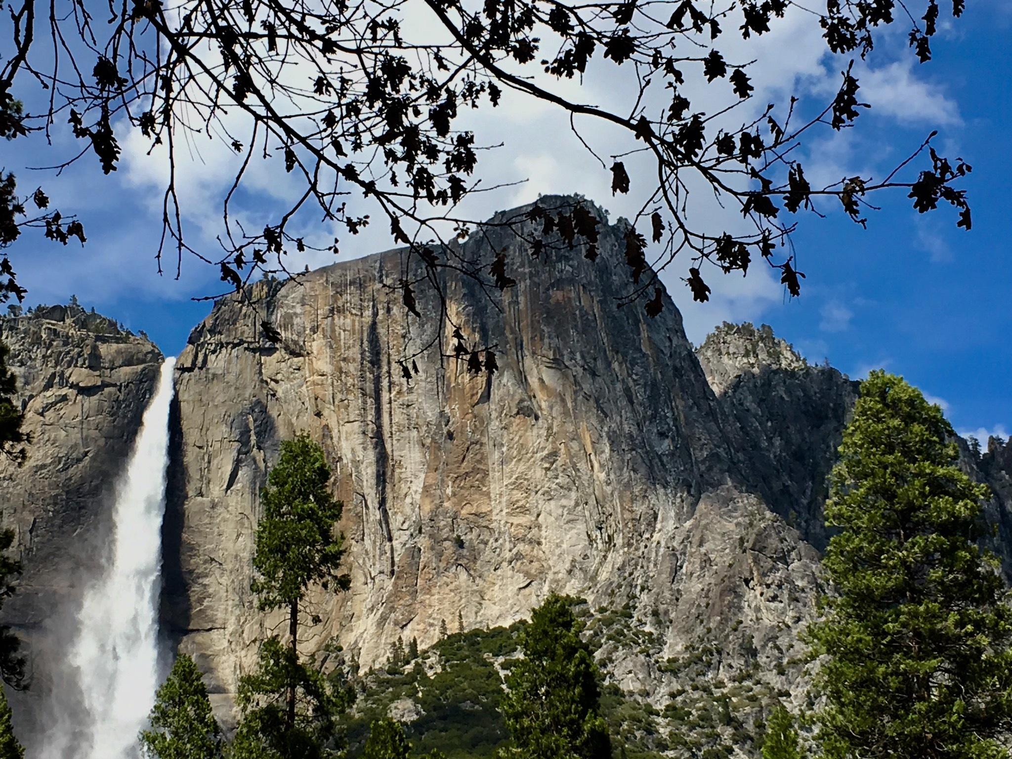 Yosemite National Park USA  by Kiran bhatt