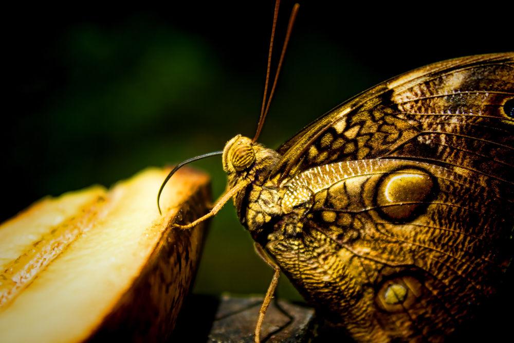 butterfly farm 078 by ShutterSpeed