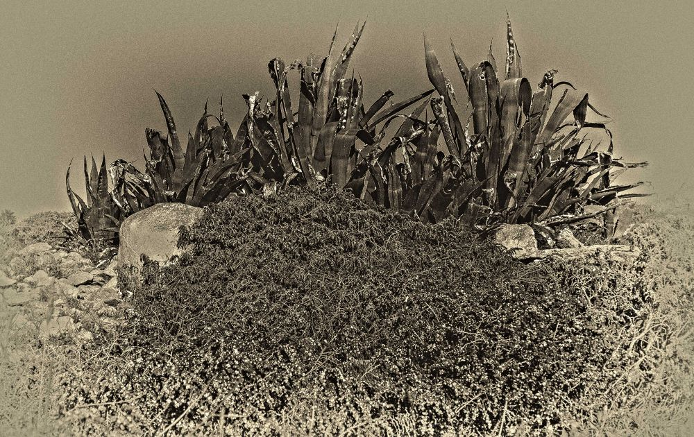 Agave by Fotoabbate