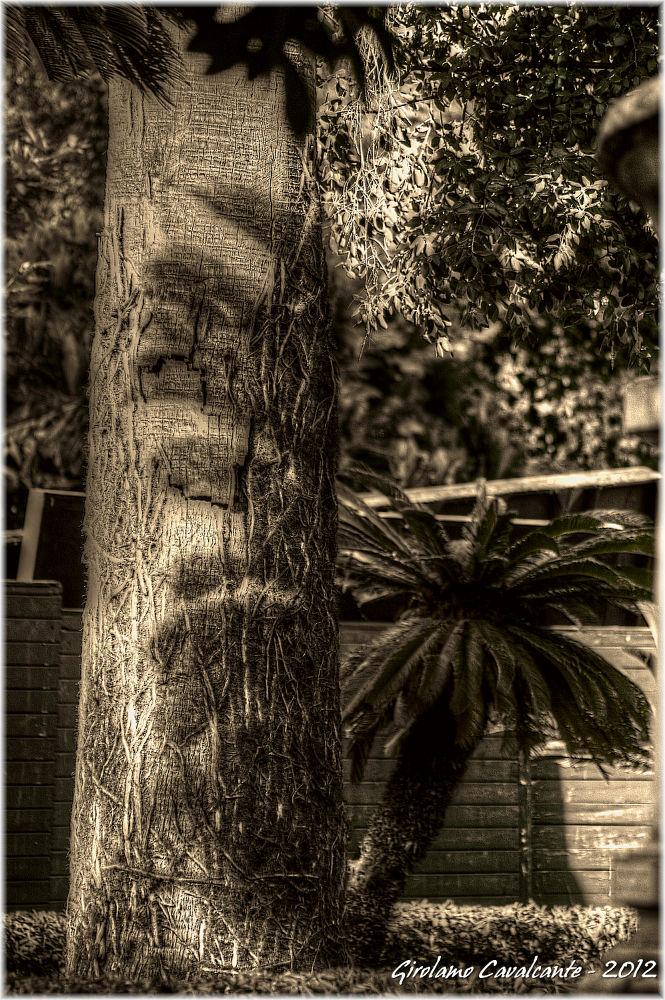 ombre albero by GiroPhoto - Girolamo Cavalcante