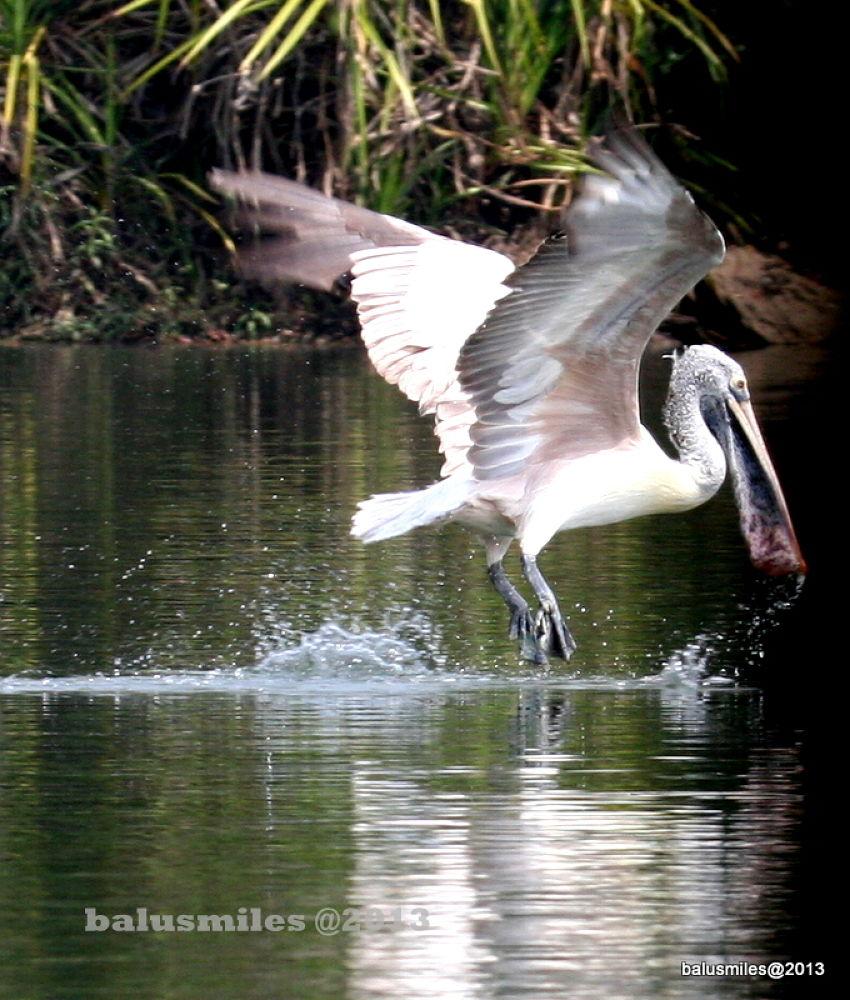 magic of nature. by balasubrahmanaya.k.s