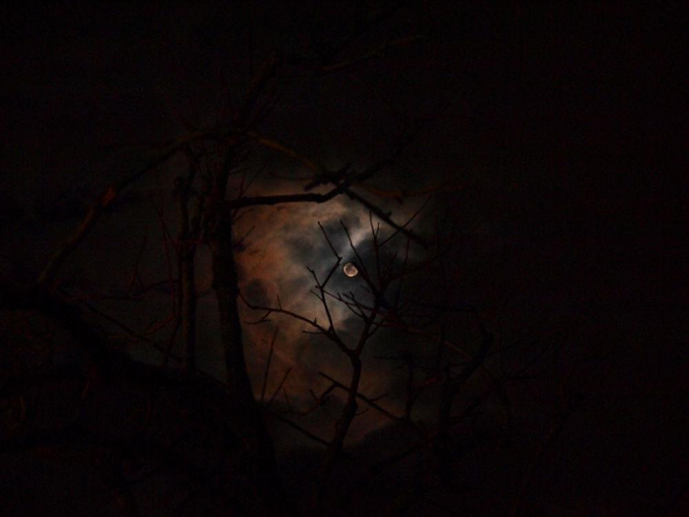 moon and persimmom 3 by akiramiyamoto96