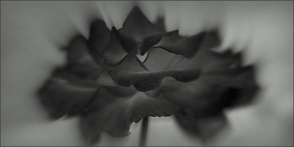 _DSC0023.jpgc by Hajkova