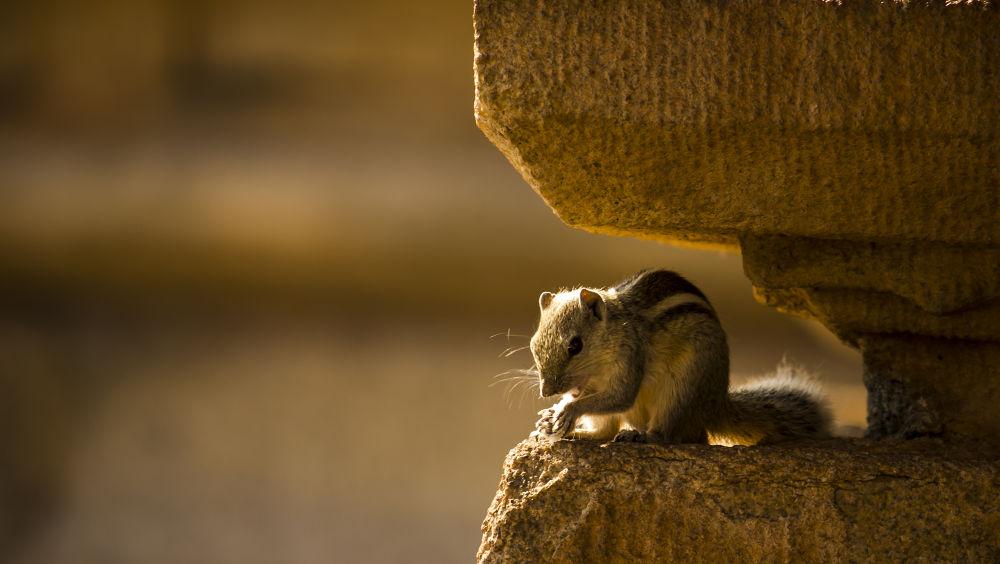 Praying for saving animals by Ramesh Muthaiyan