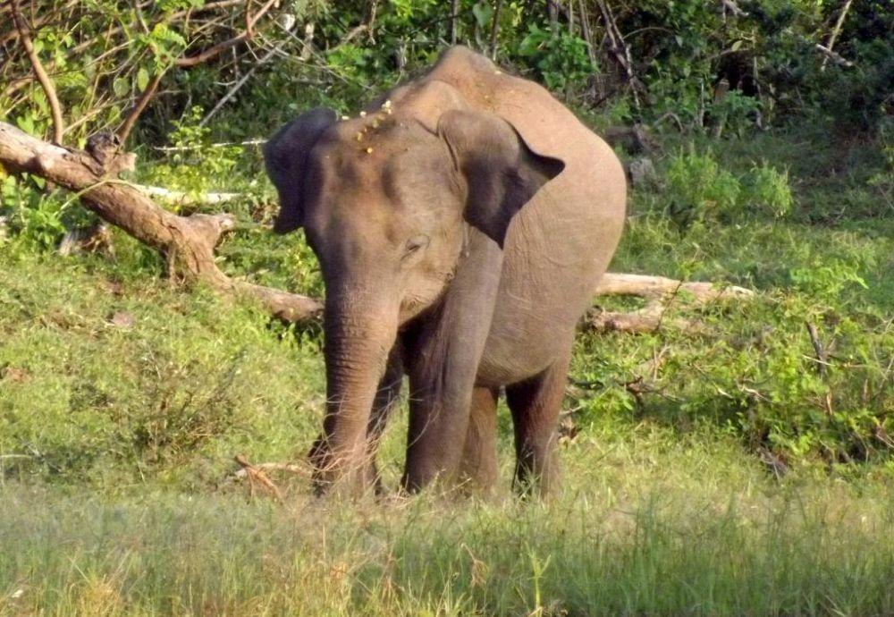 elephant enhanced by Chris Roughley