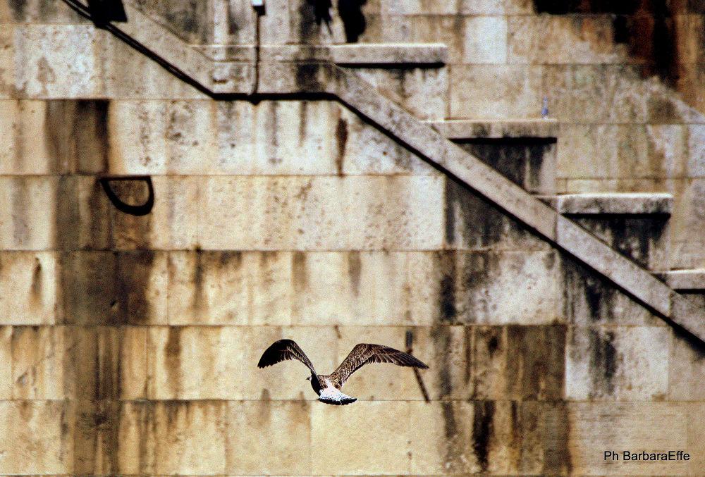 Volando nel caos.... by barbaraeffe