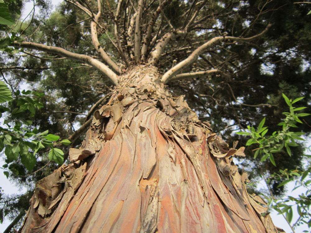my lovely tree by mohammad_kheyrkhah