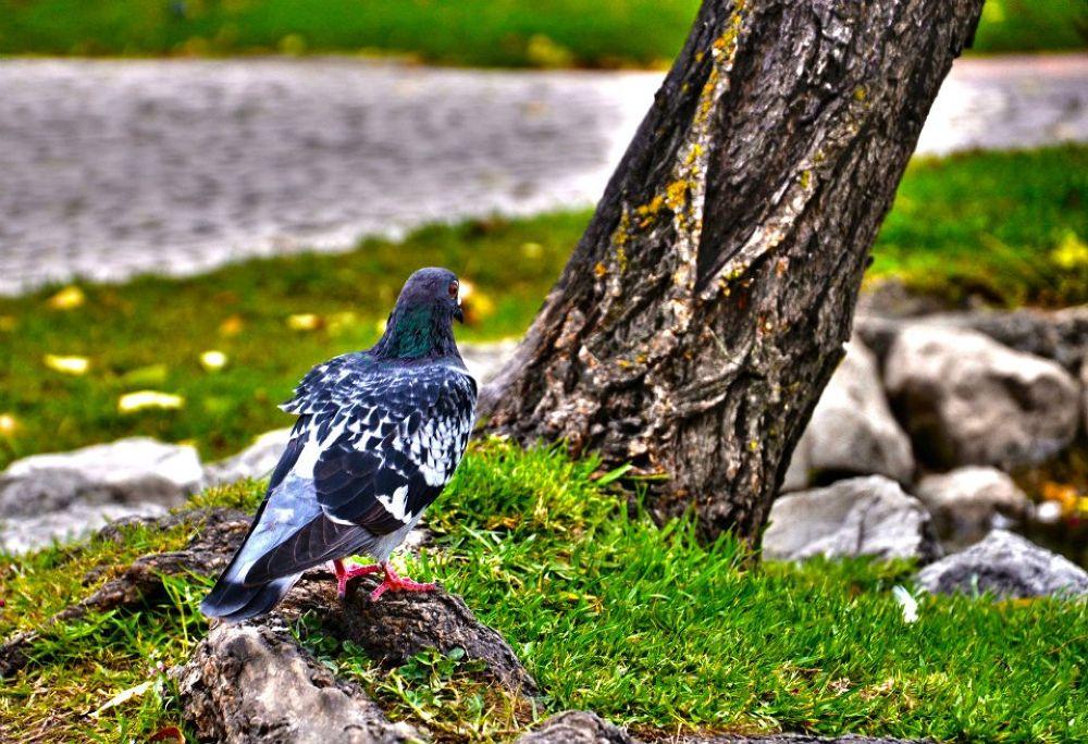 Photo in Random #birds #pigeon #animals #barreiro #parque da paz