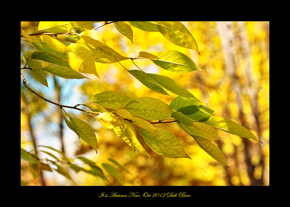 It is Autumn Now by didibaev