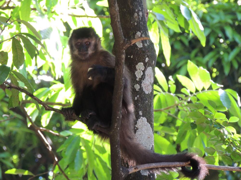 macaco prego by LekaCarvalho