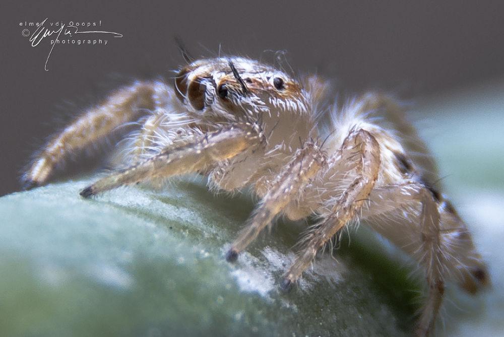 spider by vdjooops06