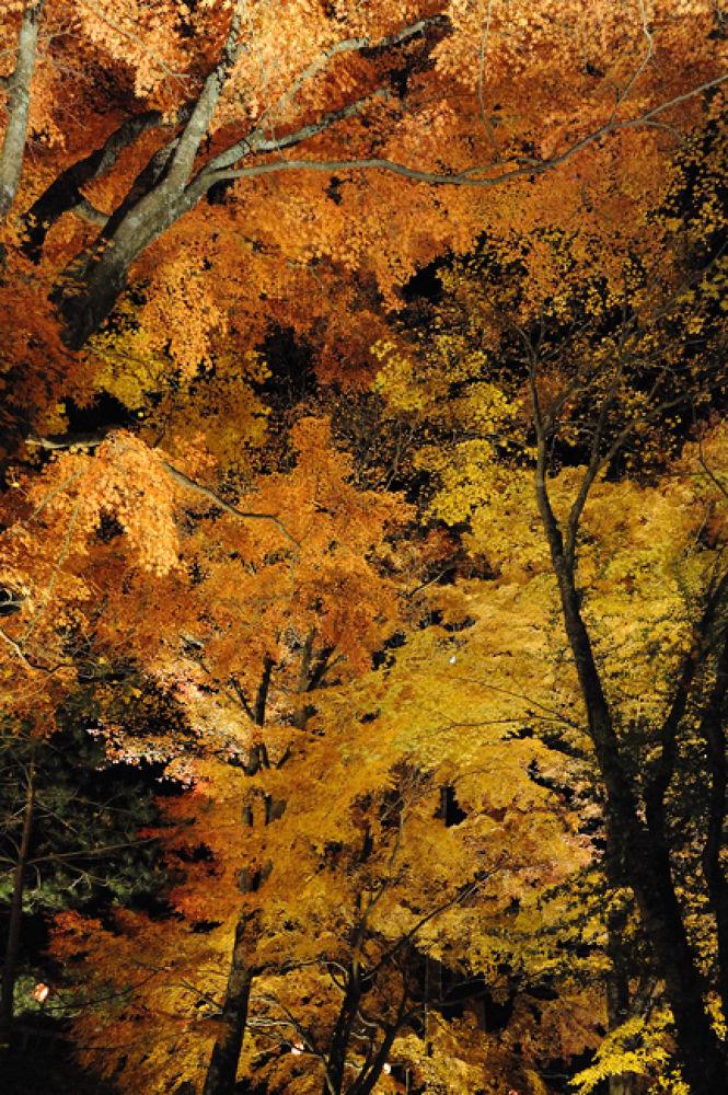 Autumn forest of Mount Fuji at night. by YoshihitoNakamura