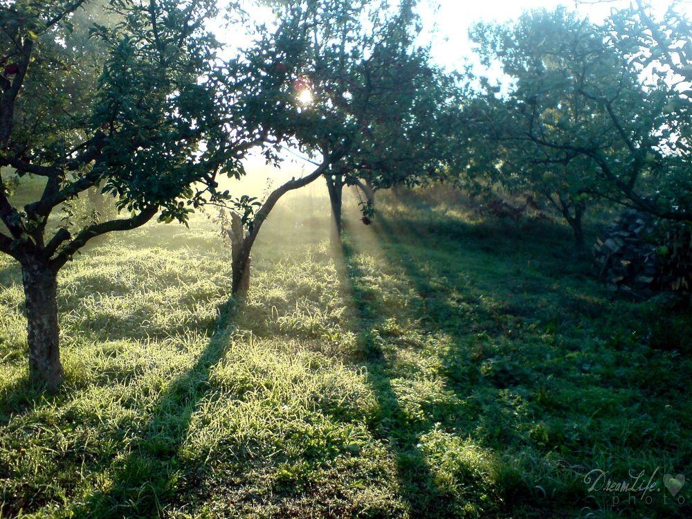 sunshine by Belladonna Lullaby