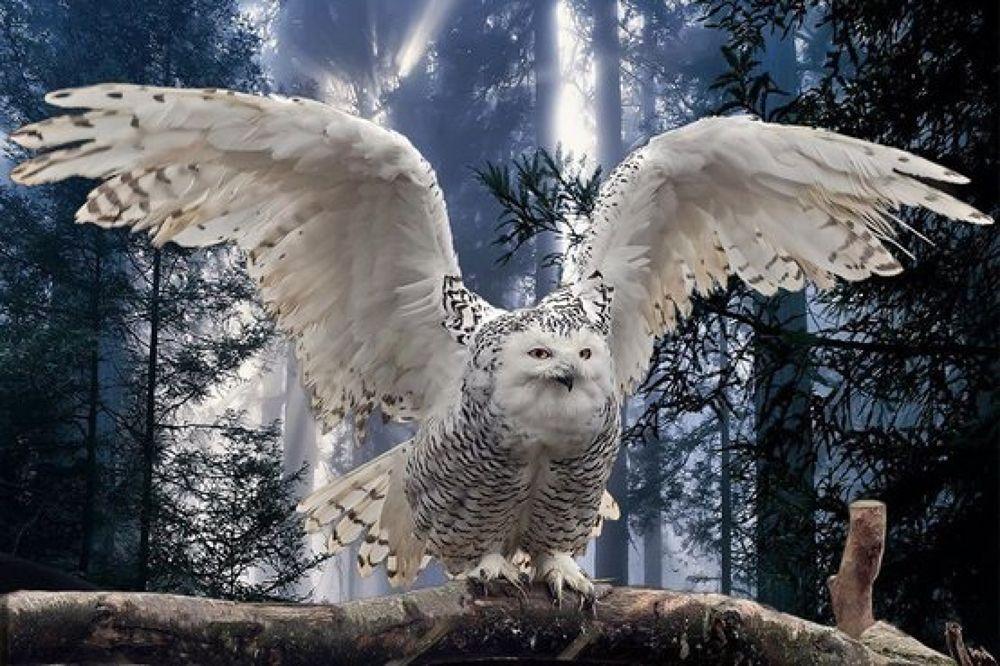 owl by ruudzandvoort