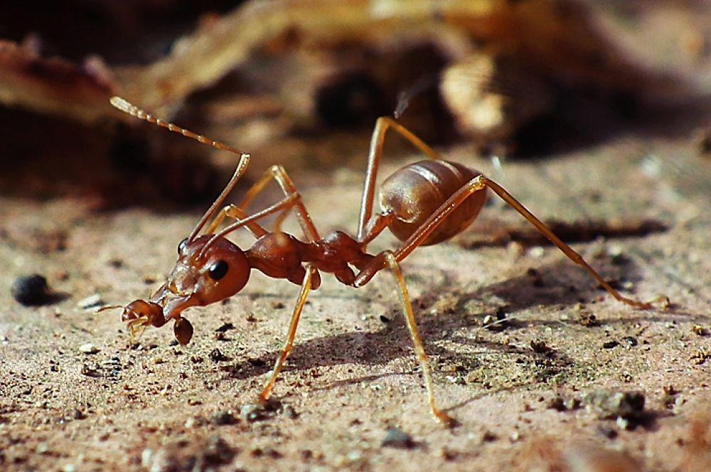 The Ant by bram007yuli