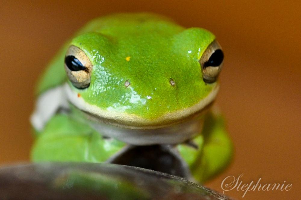 Photo in Nature #nikon #nature #colorful #flogs #micro