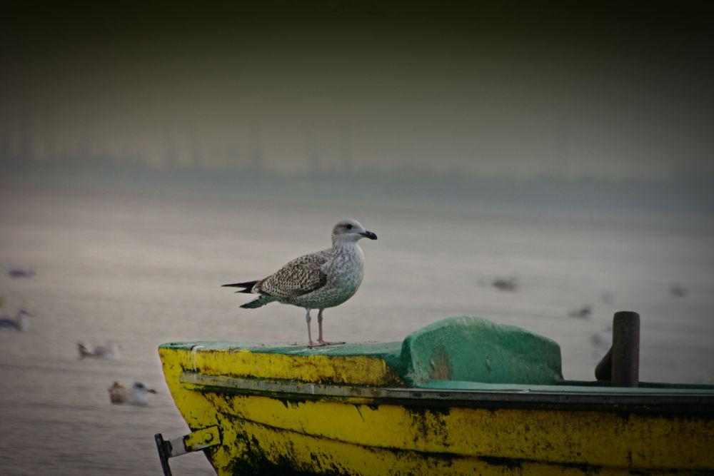 Seagull by TomPiotrowski
