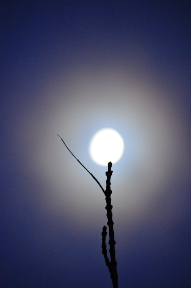 moonlight_on_a_stick by KevinMorganDesigns