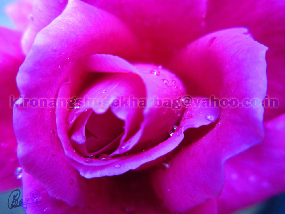 07-01-2012 (13) by Kironangshu Sekhar Bag