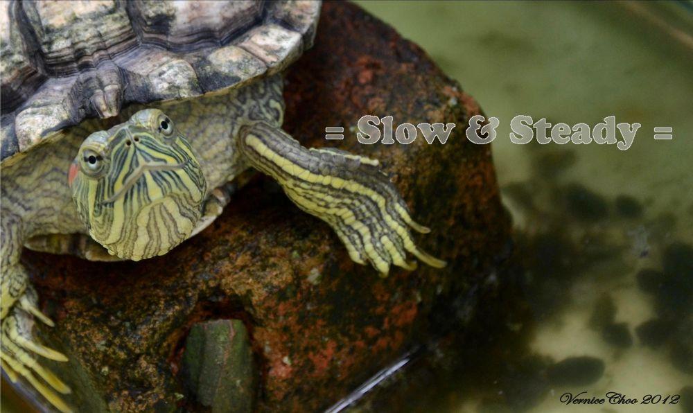 Slow & Steady by VerniceChoo
