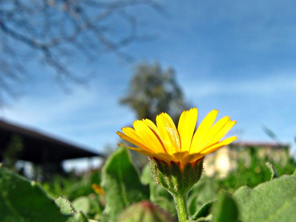 flower by mervenurcal