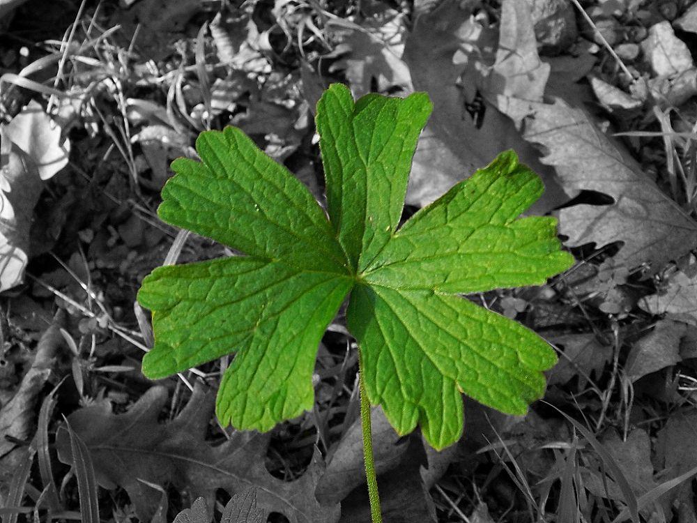 Green Star by brhmtl