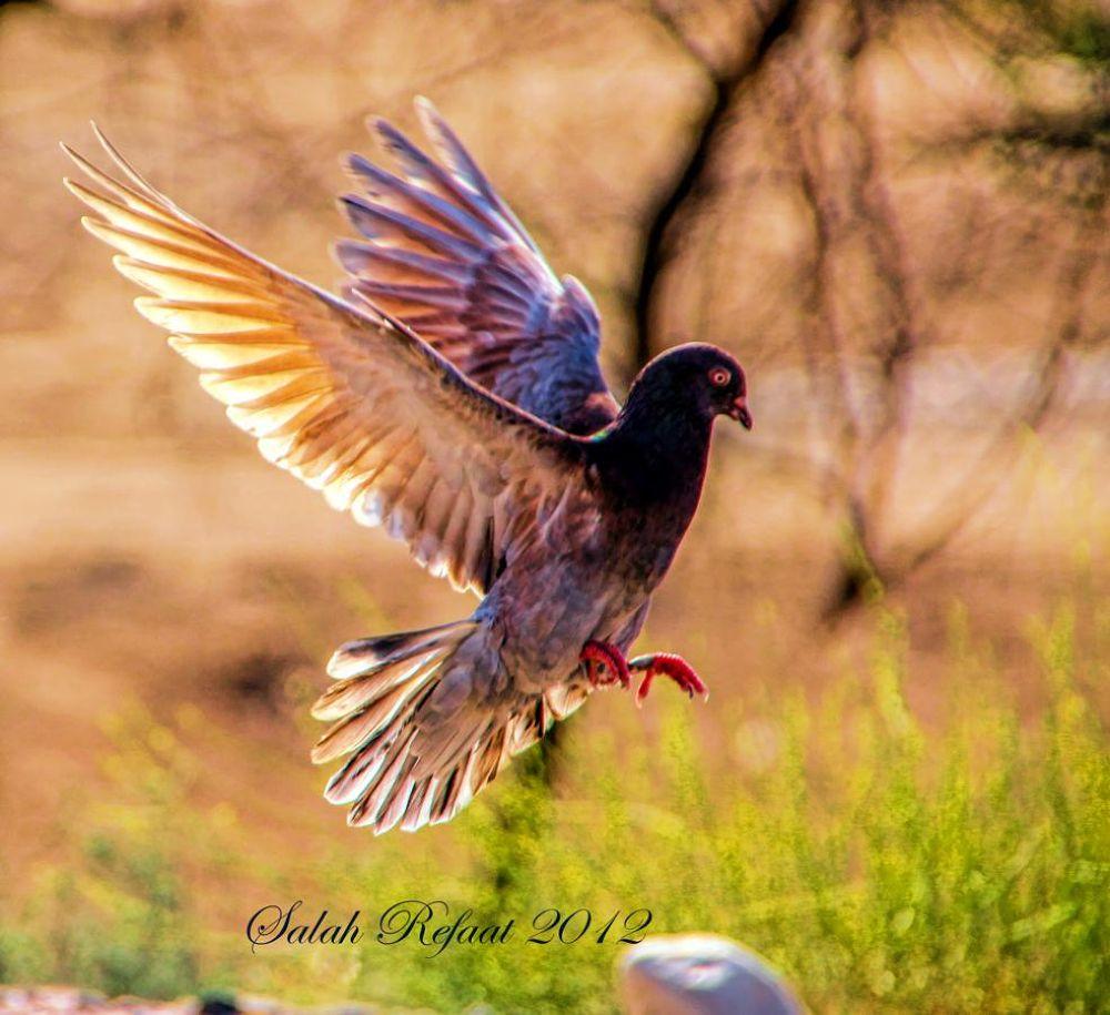 Muscat Oman 01-11-2012 by Salah Refaat
