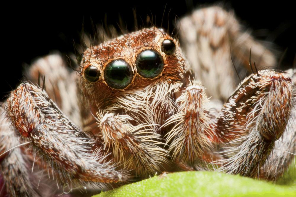 Spider portrit by mantder