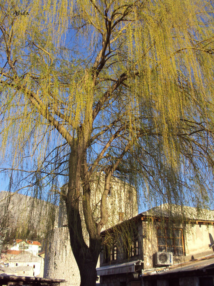 Mostar Old Town by alida