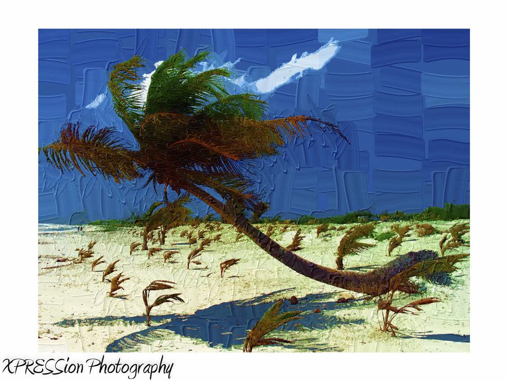 palms by andreiorlov